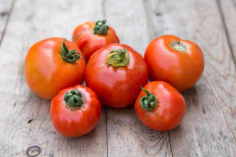 cà chua chín cây
