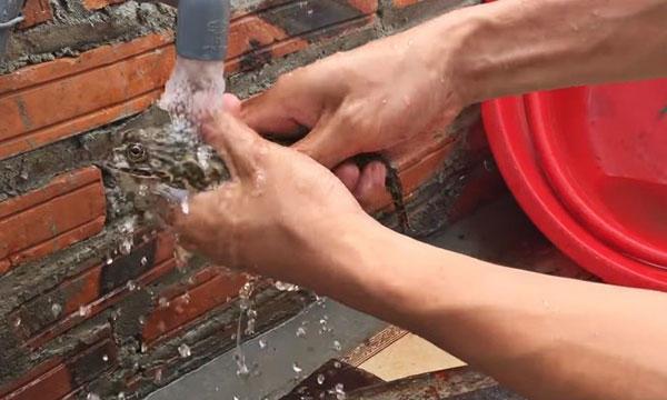 rửa ếch