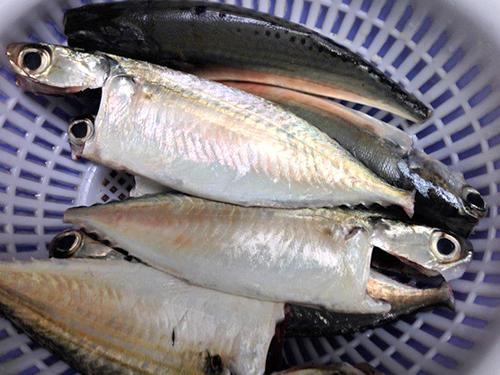 sơ chế cá bạc má